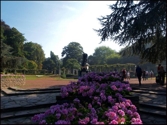 Park bloemen