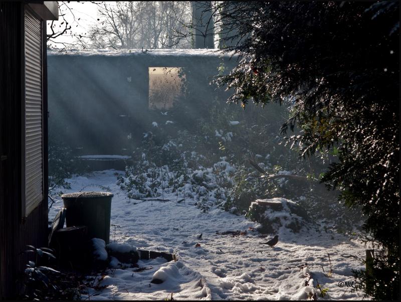 Snow016