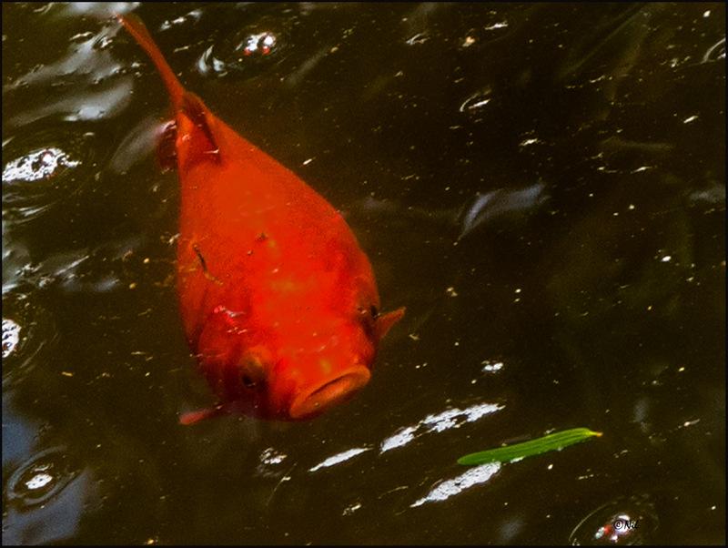 1-Park02 fish
